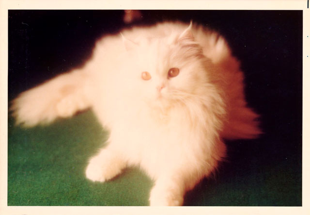 ペルシャ猫.jpg