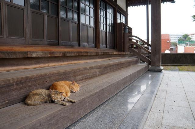 お寺のにゃんこ (1).JPG
