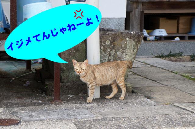 お寺のにゃんこ (6).JPG