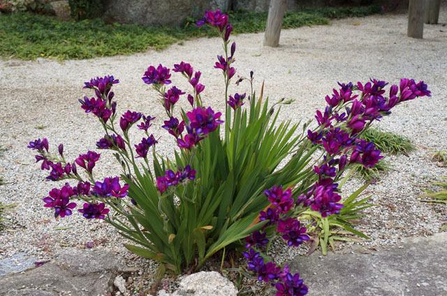 お寺の花.JPG