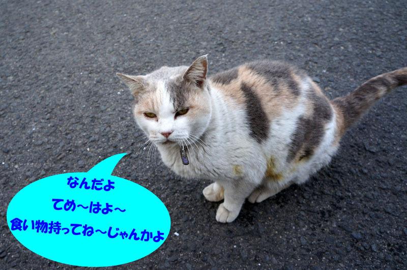 にゃんこ 3.JPG