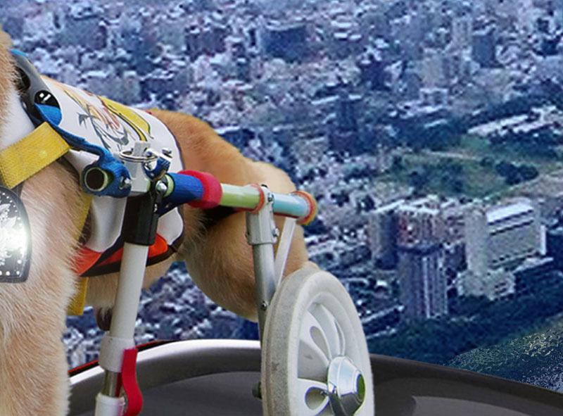 クーちゃんフェラーリで飛ぶ-絵画.jpg