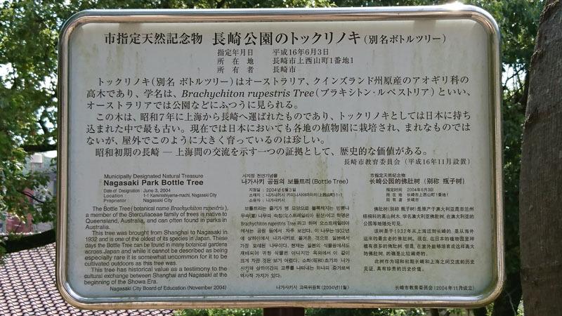 トックリノキ 1.JPG