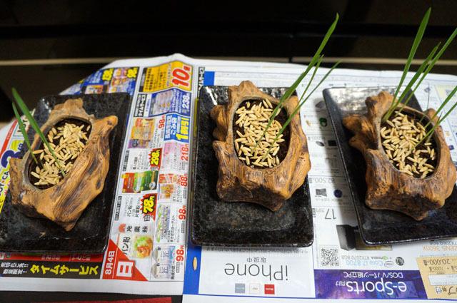 ペット用生野菜の種 (4).JPG