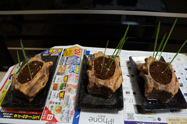 ペット用生野菜の種 (5).JPG