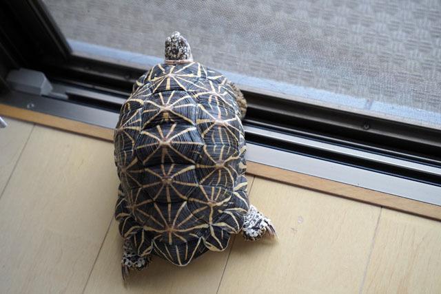 ホシガメ (1).JPG