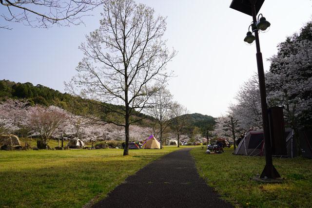 伊佐ノ浦公園 桜 (13).JPG