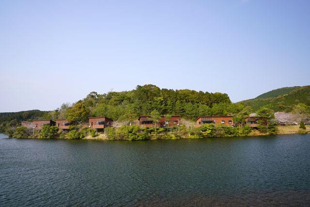 伊佐ノ浦公園 桜 (14).JPG