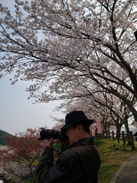伊佐ノ浦公園 桜 (22).jpg