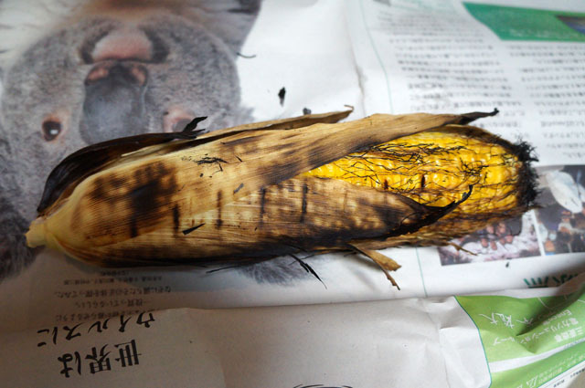 北海道 トウモロコシ (2).JPG