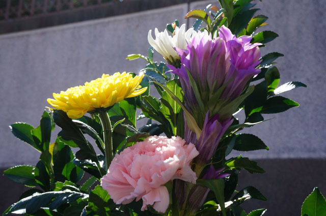 墓参り (2).JPG