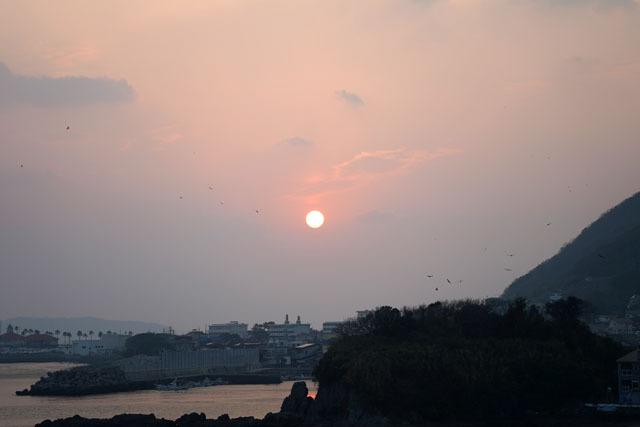 夕陽 鳥 (1).JPG