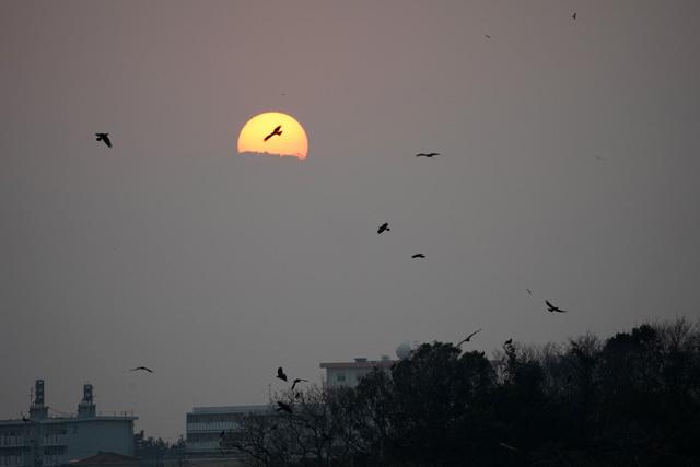 夕陽 鳥 (3).JPG
