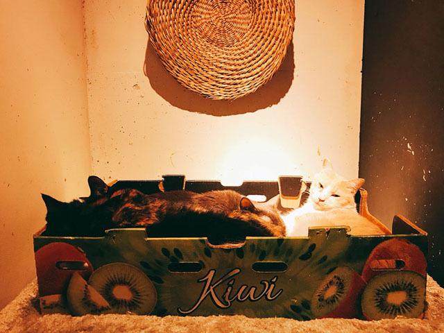大名の猫カフェ (3).jpg