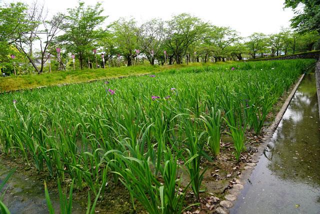大村公園 (2).JPG