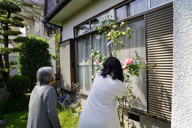 実家の花 (14).JPG