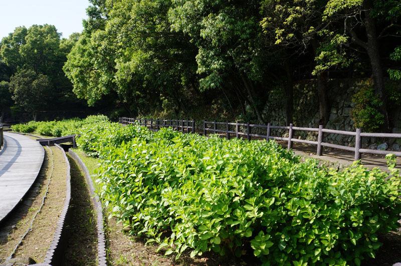 川原大池公園 3.JPG