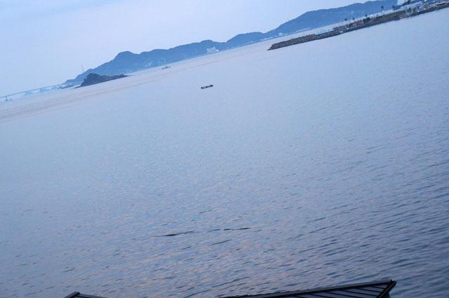 海の浮遊物.JPG