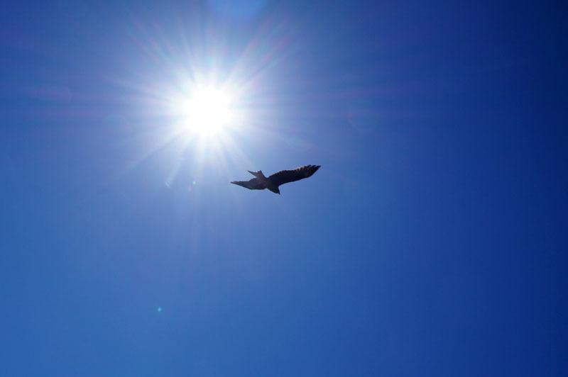 空 鳥.JPG