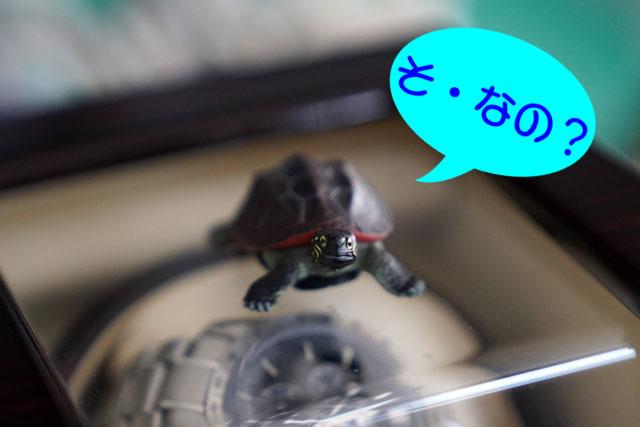 立体カプセル百科事典原色爬虫類カメ目図鑑 (5-2).JPG