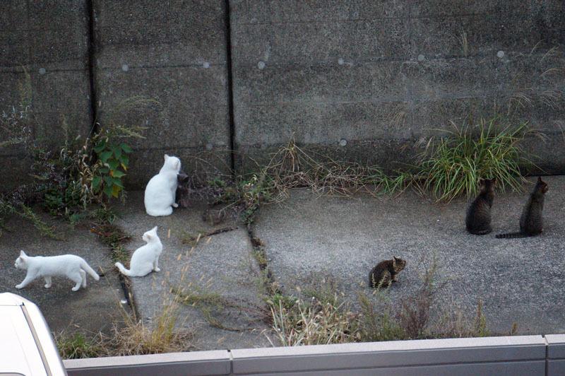 釣り 猫 4.JPG