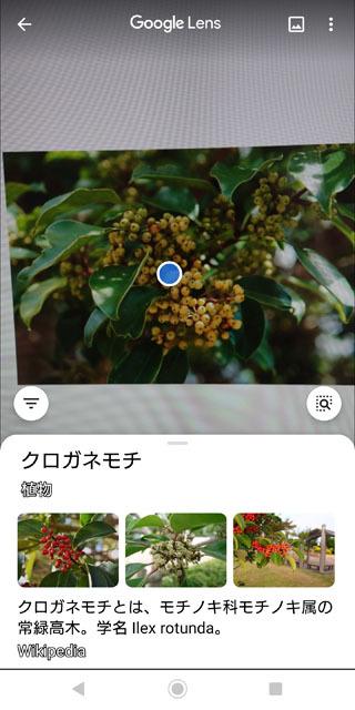 Google lens (1).jpg